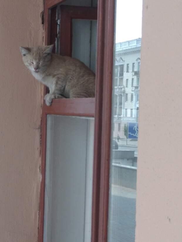 Этот рыжий чудик год назад спас себя сам, запрыгнув в окно моего кабинета...