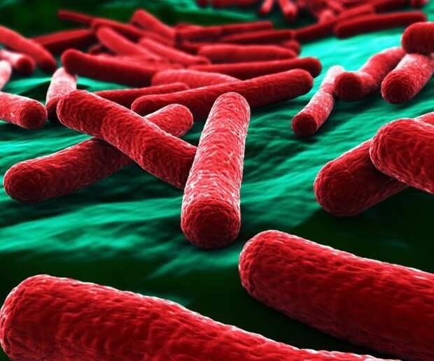 7 самых опасных инфекций, которые могут убить за несколько часов болезни, опасность...