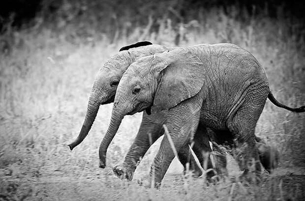 25 животных-близнецов, которые не оставят вас равнодушными