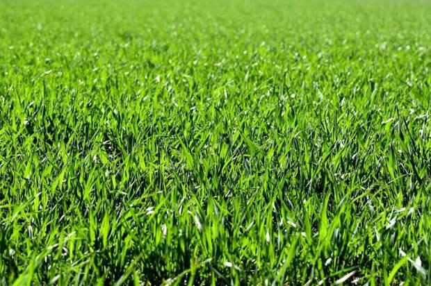Во дворе на Русанова восстановили газон