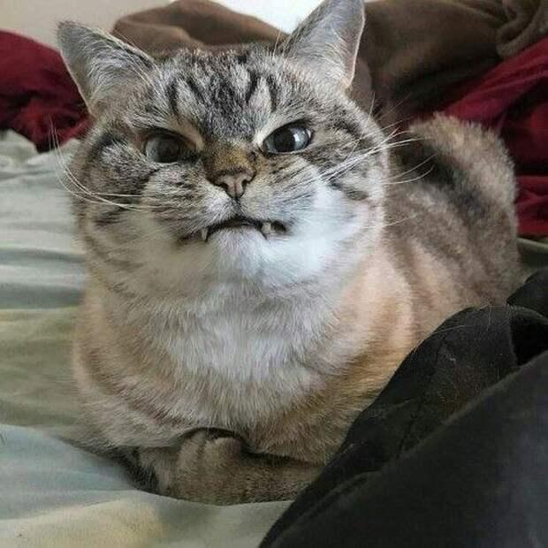 Суровые коты, с которыми шутки плохи!
