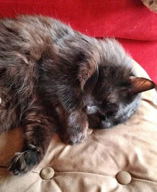 Кот спит