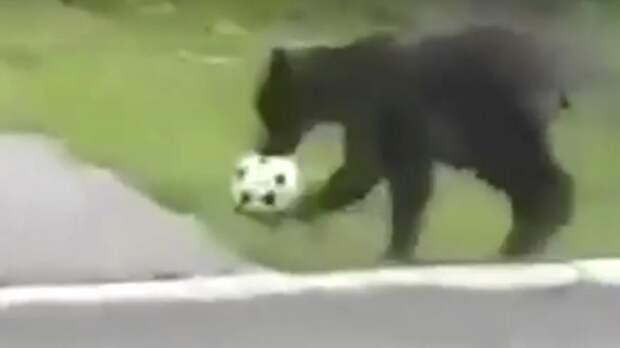 На Камчатке медведи поиграли в футбол