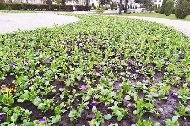 В Тамбове начался сезон массовой высадки цветов