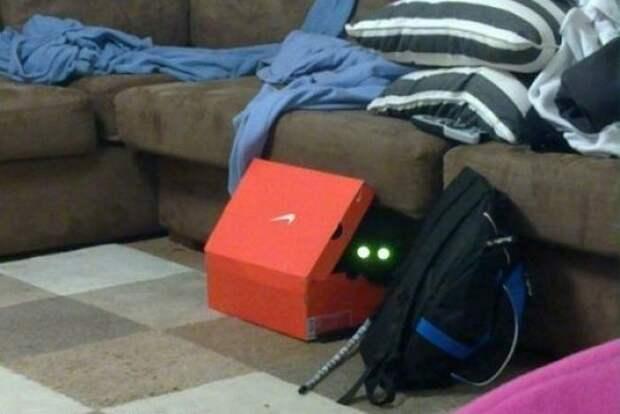 http://abunda.ru/uploads/posts/2011-01/1295250552_036_13451_sneaky_kitties_36.jpg