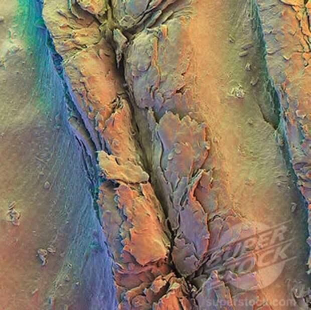 Human Fingerprint Ridge