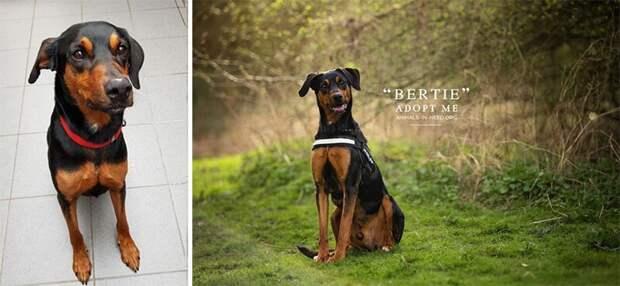 13. Берти животные, помощь, портрет, приют, собака, фотограф, хозяин