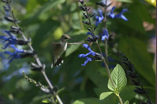 Удивительно красивые птицы!