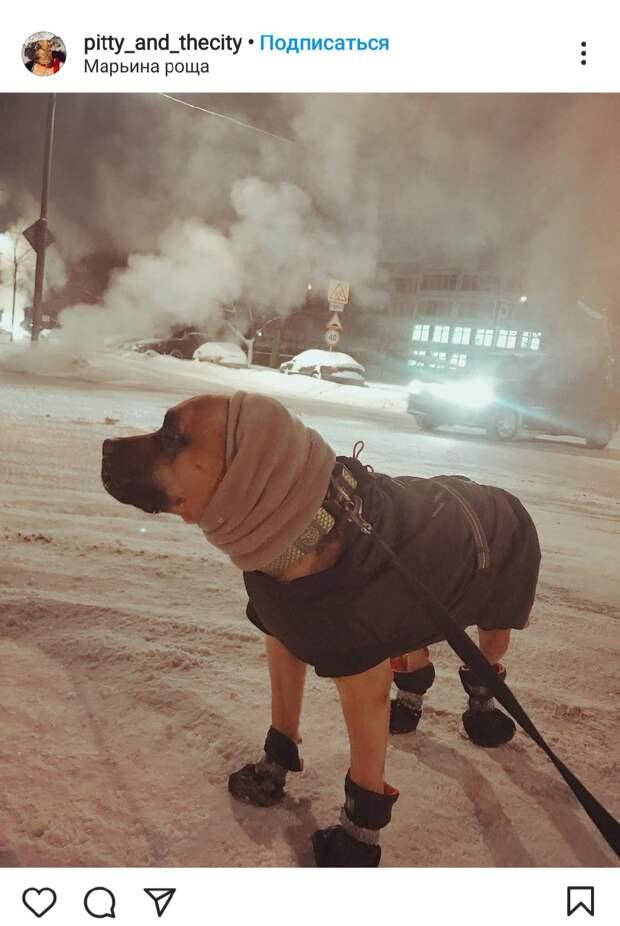 Фото дня: по улицам Марьиной рощи прошелся четвероногий модник