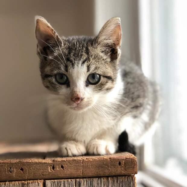 Развозчица почты заметила маленький пушистый комок, бегущий за ее грузовиком! Котенка не только спасли, но и нашли его брата!