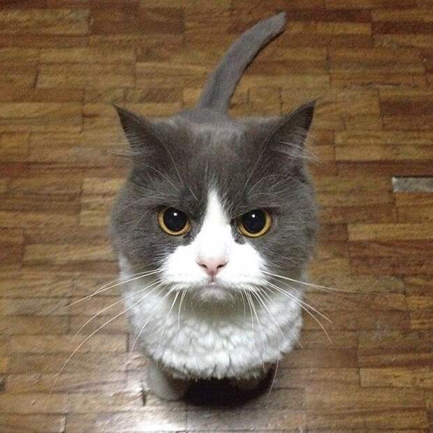 Злющие котики, которые не рады понедельнику