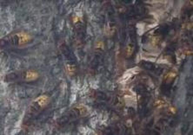 Шершни напали на гостей винного фестиваля в Германии