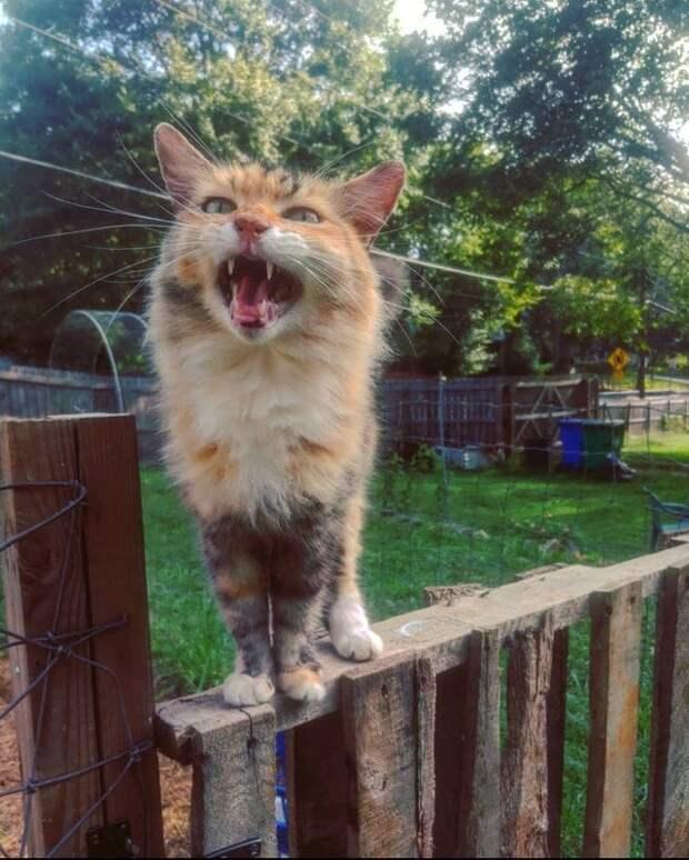Котики, по которым давно плачет Оскар