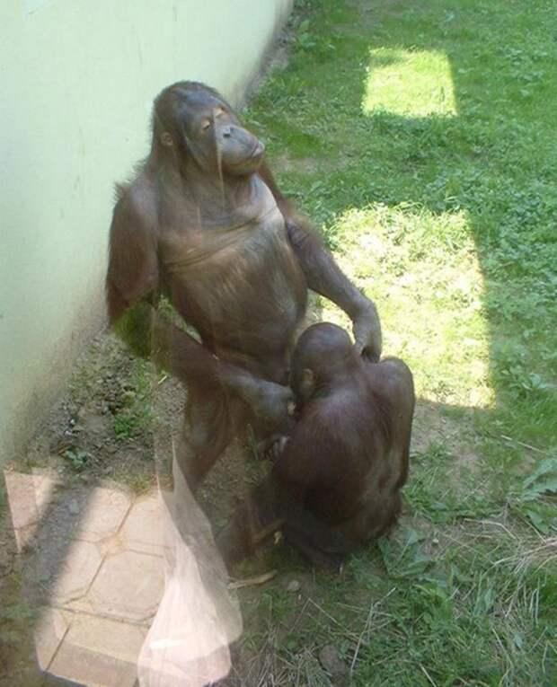 zoopark-zveri-20
