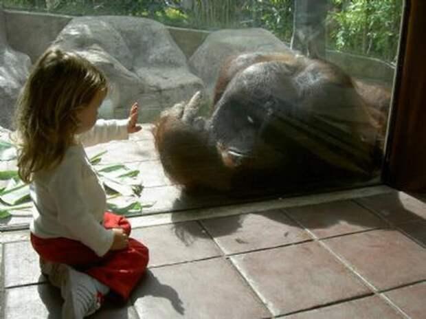 zoopark-zveri-2