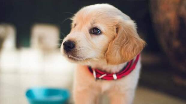 В Госдуме заверили, что в России никогда не будет налога на домашних животных
