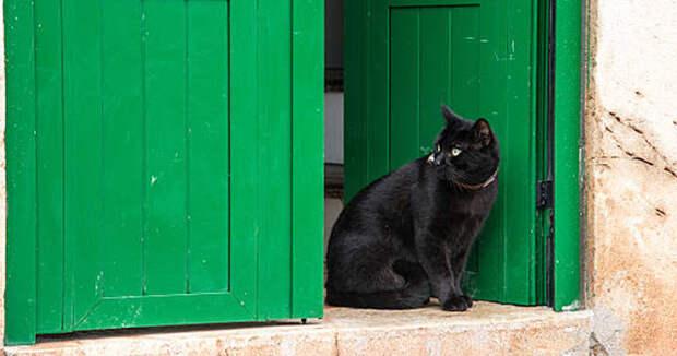 Что означает черная кошка у вашей двери