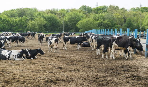 Утюменского фермера изъяли земельные участки задолги поалиментам
