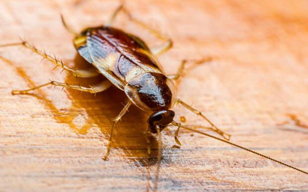 В доме на Дмитровском появились тараканы