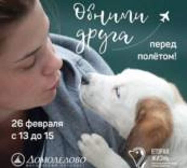 Собаки помогают пассажирам аэропорта Домодедово