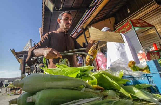 кукуруза в саудовской аравии