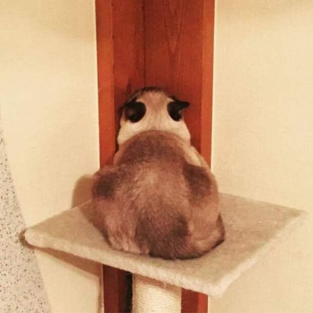 Кошка — ранимая душа, она тоже умеет обижаться…