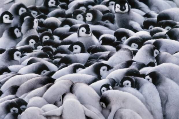 Животные в холодную погоду