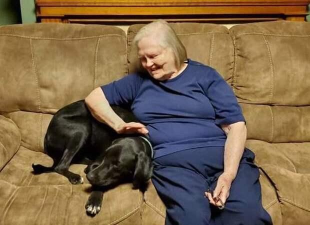 Бабушка ненавидела щенка внучки, пока он не спас ей жизнь