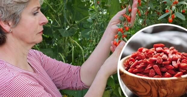 Правда ли, что ягоды годжи и барбарис это одно и тоже?