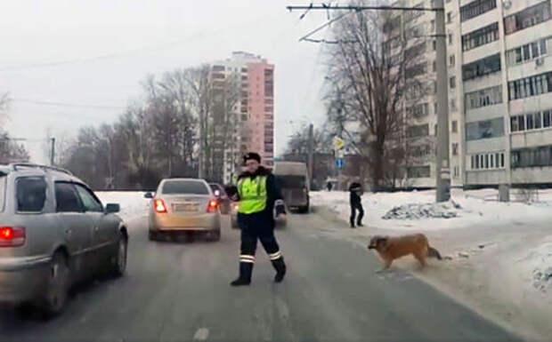 Полицейский рассказал, почему ради собаки остановил поток машин