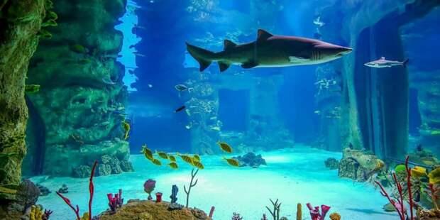 «Москвариум» представит специальную программу ко Всемирному дню моря