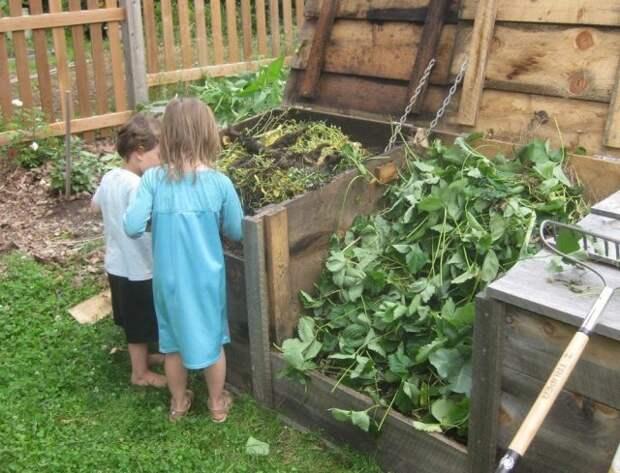 ботва томатов в компосте