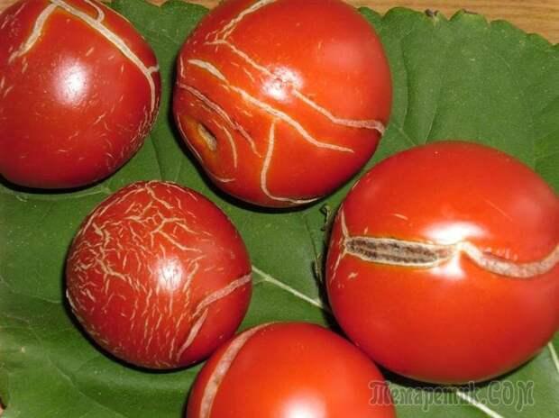 Почему лопаются помидоры и как этого избежать{q}