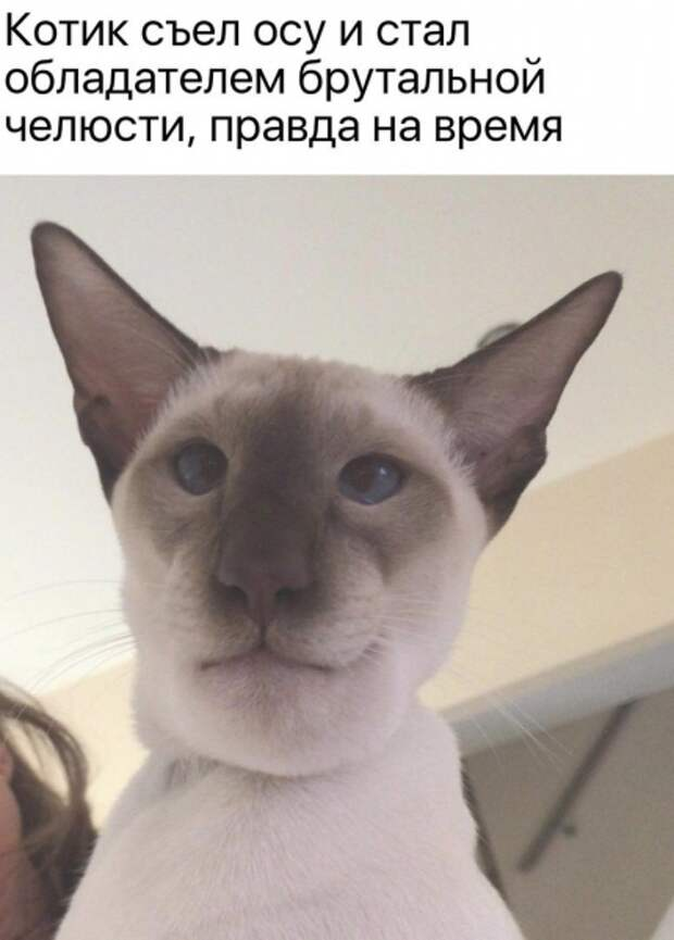 Кот - это всегда звучит гордо!