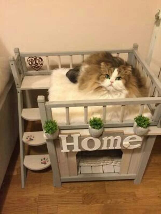 Кондоминимум для кота