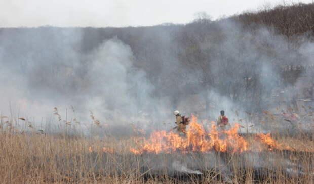 ВТюменской области заминувшие выходные потушили 60 лесных пожаров