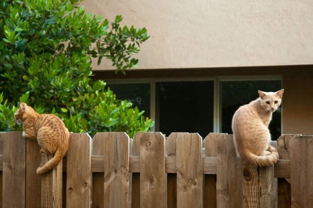 Что делать, если забор соседа стоит не по кадастру. Инструкция