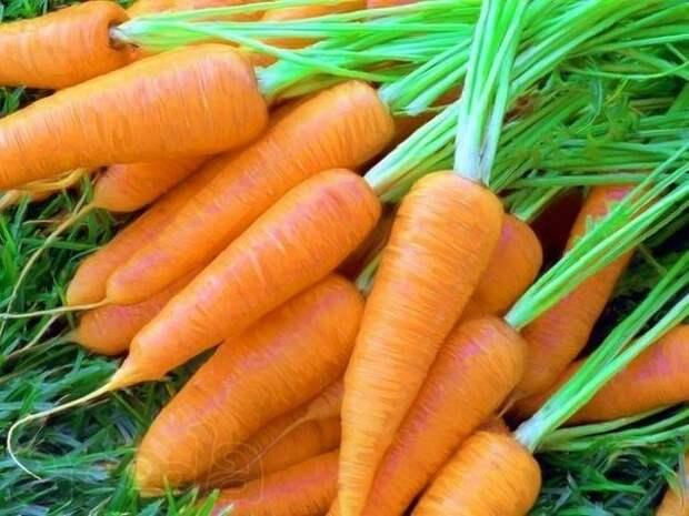 Эффективный способ посева моркови.