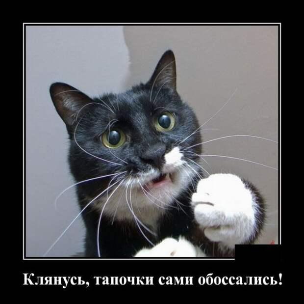 Позитивные и смешные демотиваторы со смыслом (10 фото)