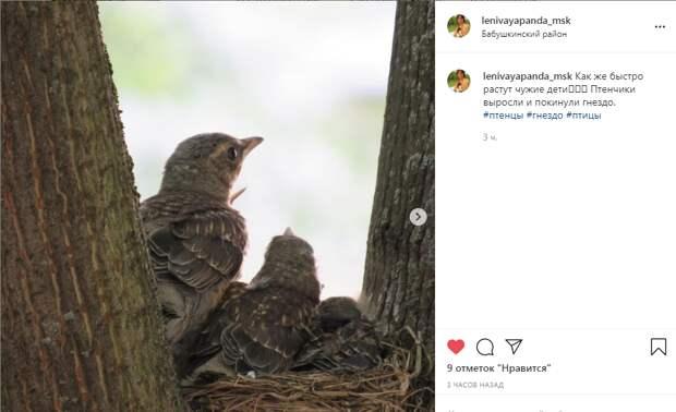Фото дня: семейство дроздов-рябинников в Бабушкинском