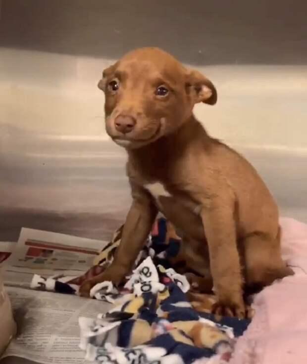 Благодарный за спасение щеночек не перестает улыбаться видео, история спасения, мило, собаки, спасение животных, трогательно, щенки