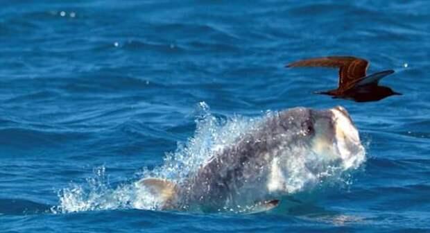 Ученые открыли рыбу, которая охотится на птиц и это выглядит как фильм ужасов