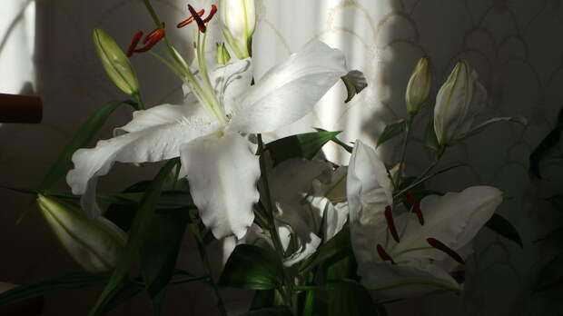 Обучение искусству живописи от С.Н. Лазарева