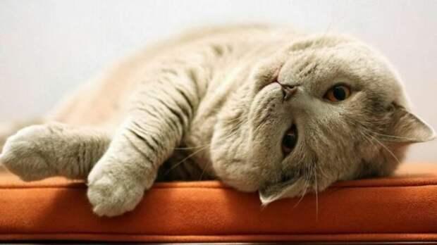Вот как коты выражают свою любовь к хозяевам