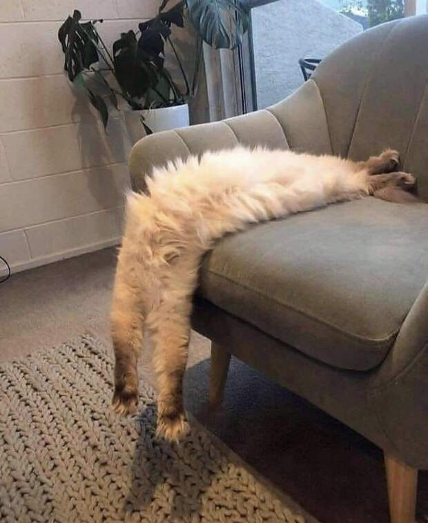 Наглые коты, которые нарушают законы физики