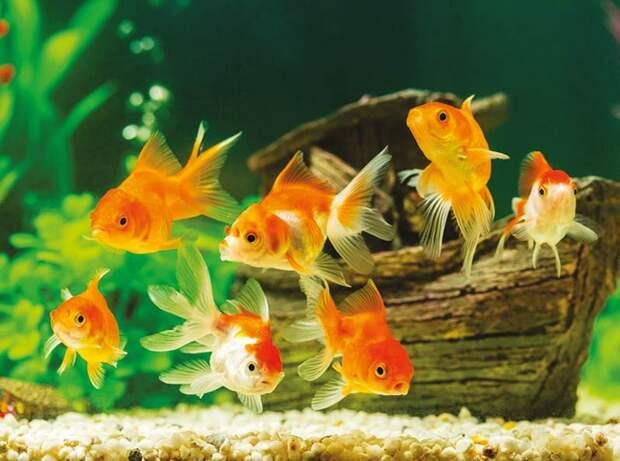 Как содержать рыбок в аквариуме, чтобы им было комфортно
