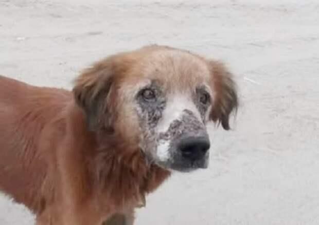 Собака находилась на границе между жизнью и смертью: волонтеры нашли ее в пустыне