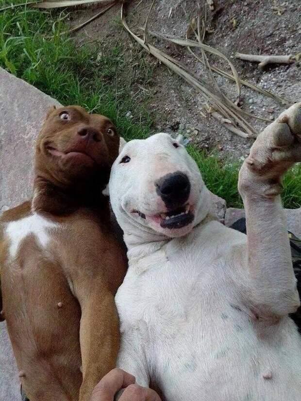 Мастера селфи животные, смех, снимок