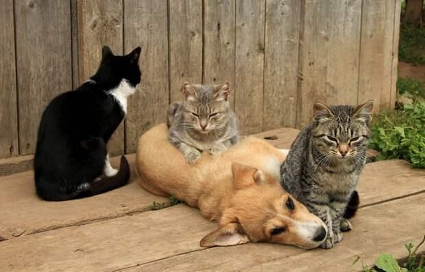 Кошкособ. Барбос, которого воспитали кошки (Продолжение)