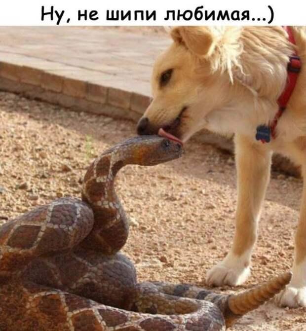 - Милая, чем это от тебя так замечательно пахнет?...